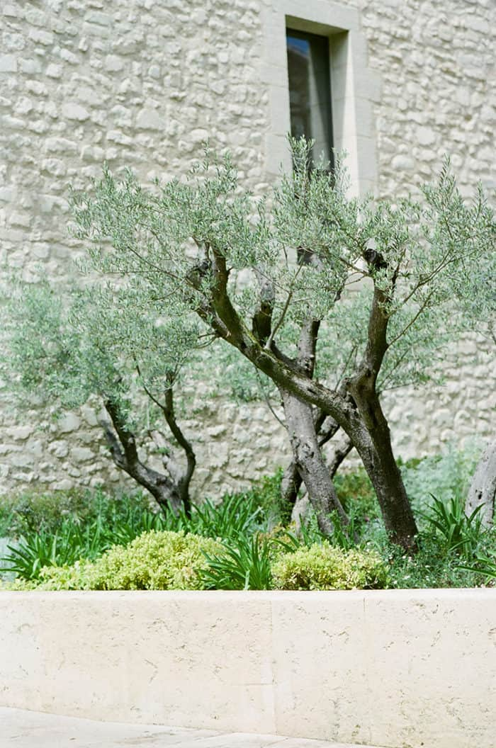Olive Trees At Domaine De Manville