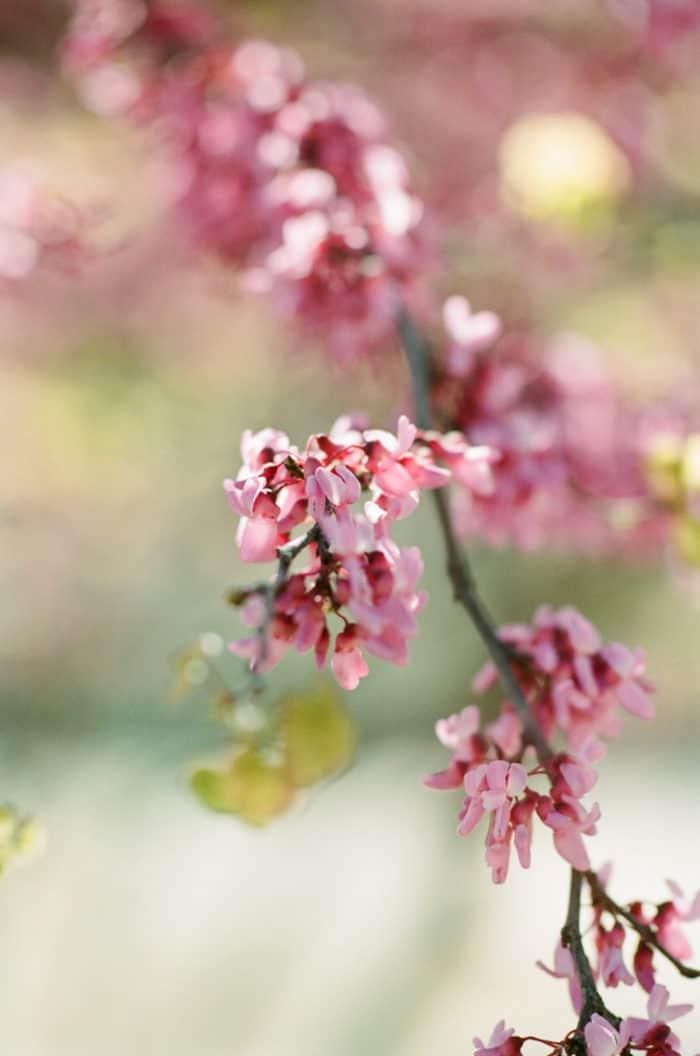 Cherry Blossom Blooms At Glanum Ruins In Provence At Tamara Gruner Workshops