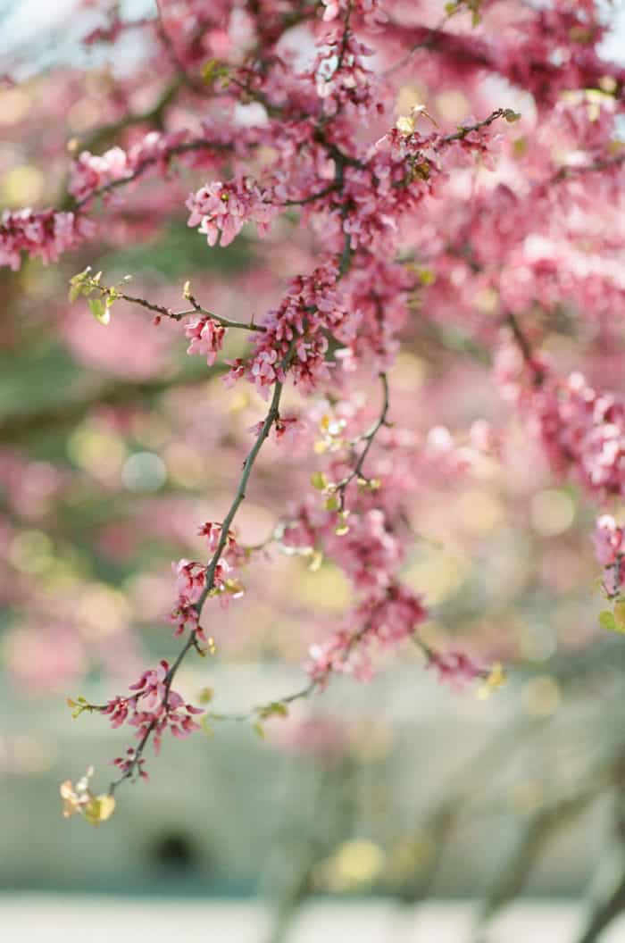 Cherry Blossom Tree At Glanum Ruins At Tamara Gruner Workshops