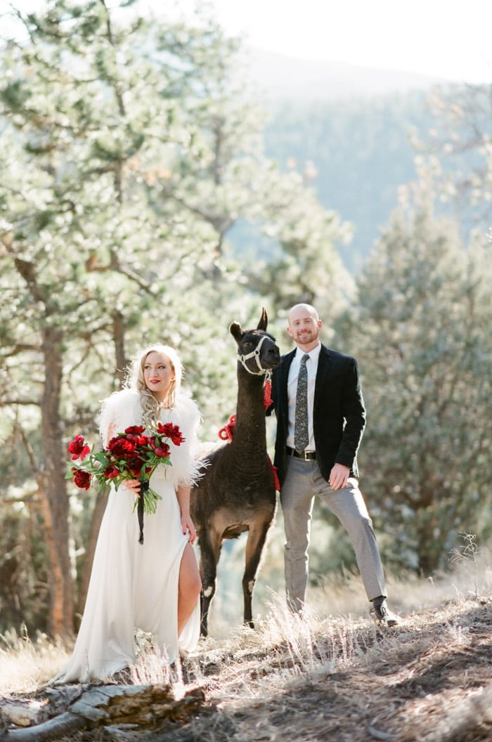 Bride with large red bouquet wearing white gown and groom in black jacket and grey dress pants posing with llama