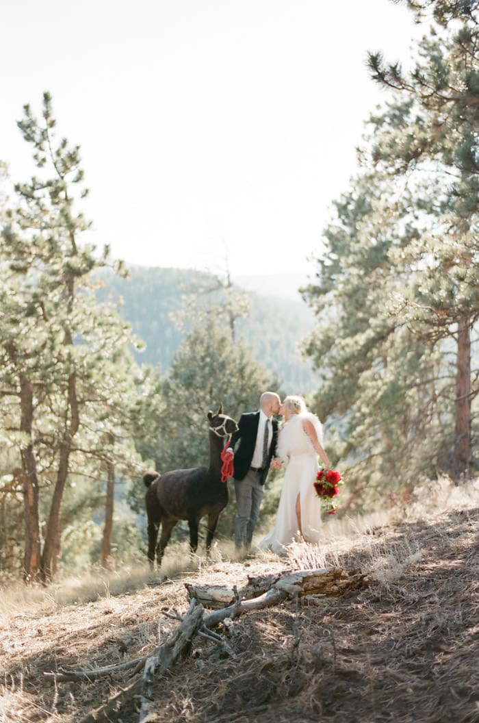 Engaged classically dressed couple kissing in Vail valley with fiance holding lead rope of llama