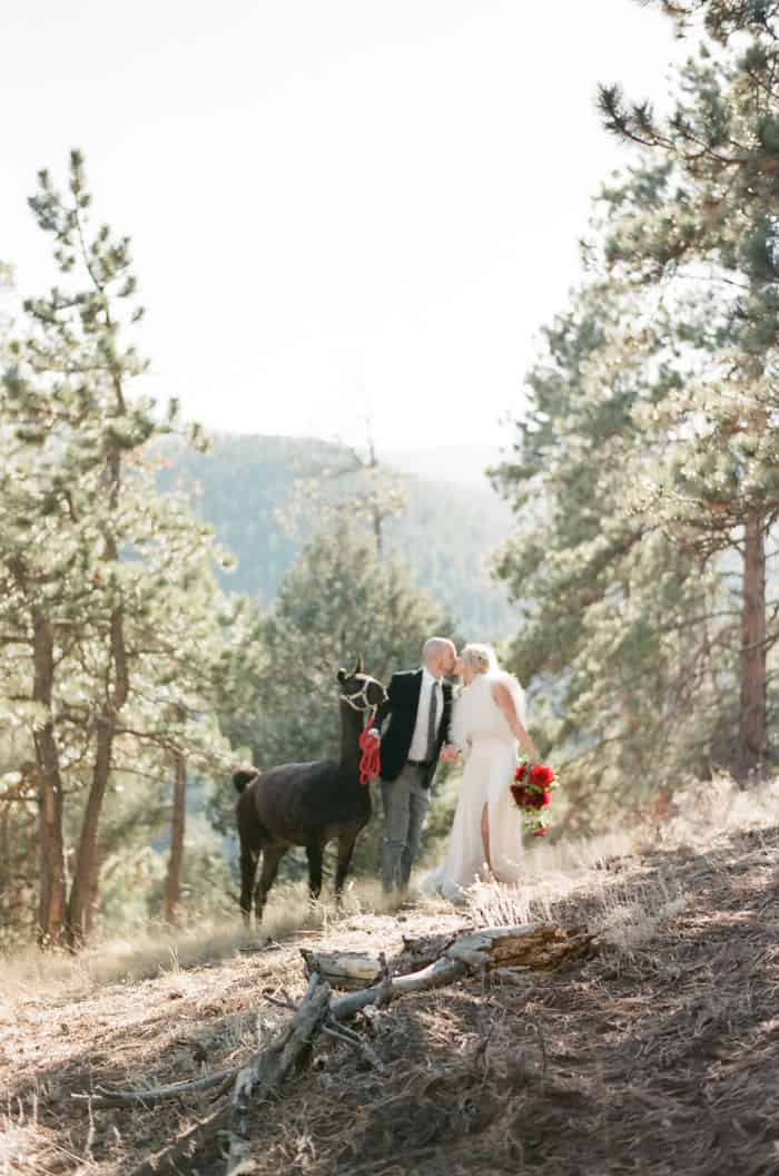 Engaged Couple With Lama At Their Vail Winter Engagement with Milk Glass Productions