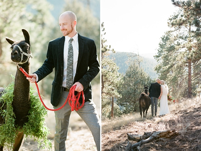 Man holding red lead rope with llama wearing greenery around its body
