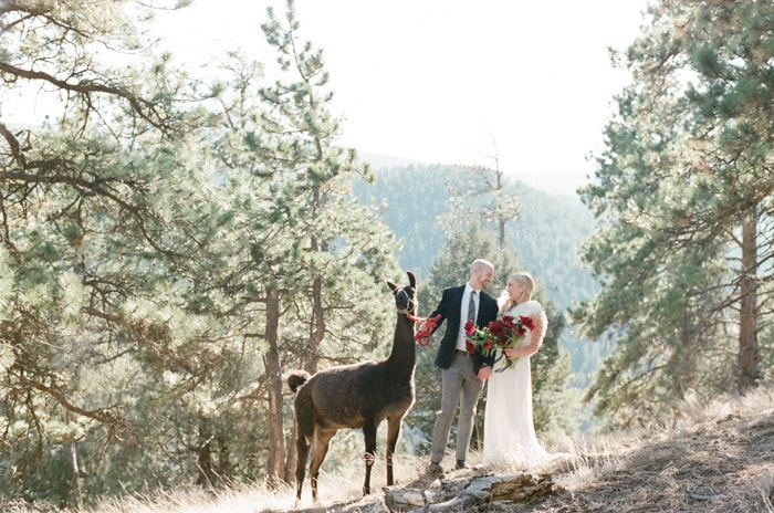 Couple at Laughing Valley Ranch with llama and rocky mountain backdrop