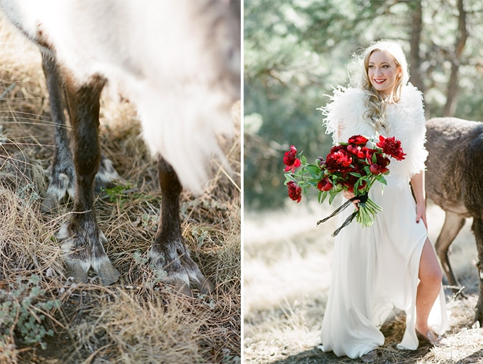 Left, closeup of reindeer's hooves and right bride posing with red florals that pop against white gown