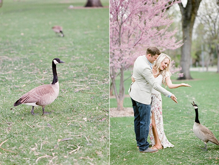 Couple feeds the geese during their Denver engagement portraits at a park