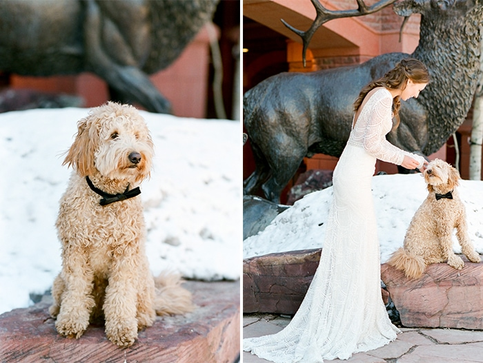 Curly haired sandy colored dog being pet by bride