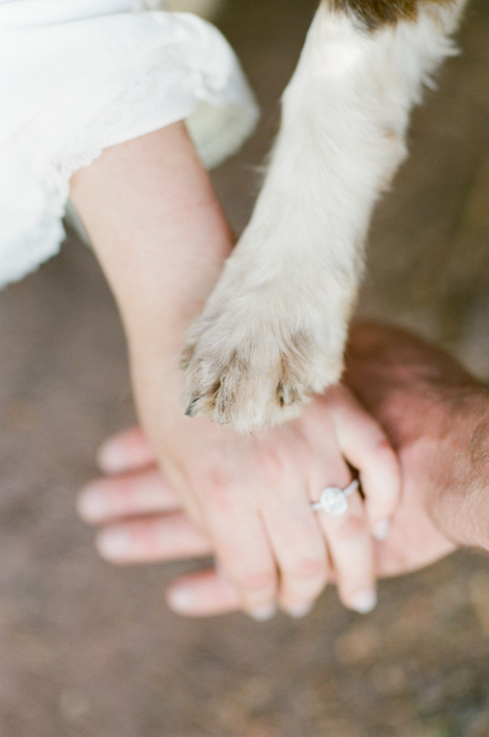 Man and woman's hands together with dog's paw