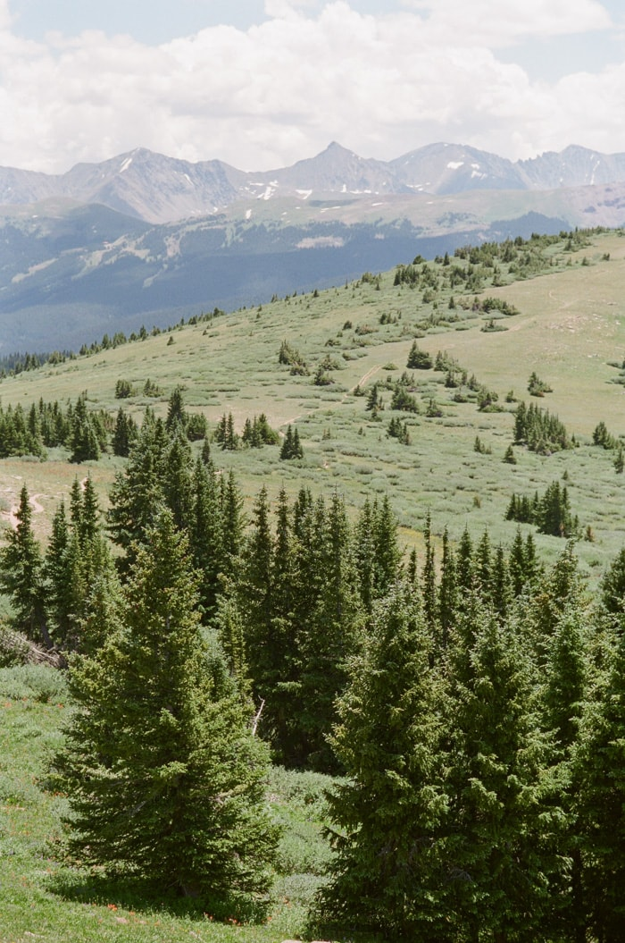 Beautiful scenic vast mountain view with scattered pine trees