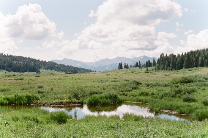 Grassy field with stream going through and pine trees to the side