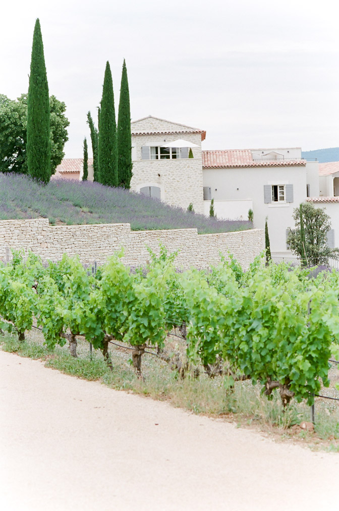 Vineyard and lavender plants at estate