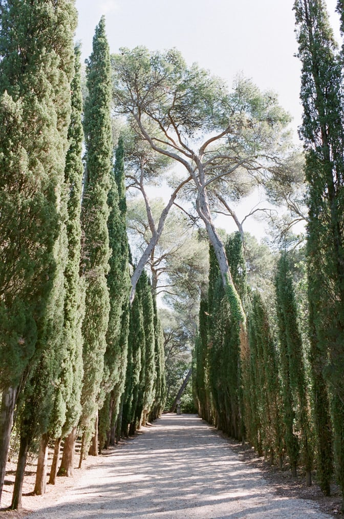 Cypress alleyway at Château Martinay in Provence