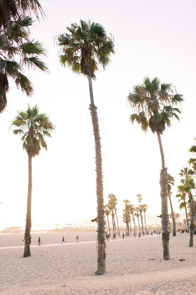 Santa Monica Beach with palm trees, picture by California wedding photographer Tamara Gruner