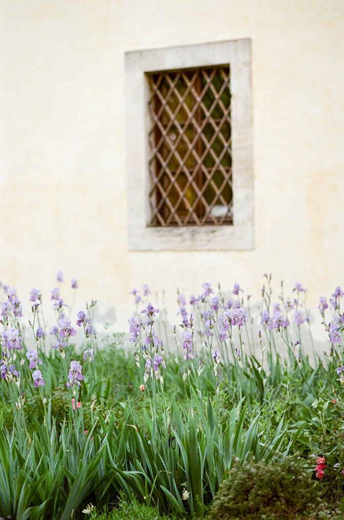 Purple flowers in front of the wall of Borgo Pignano in Tuscany, Italy