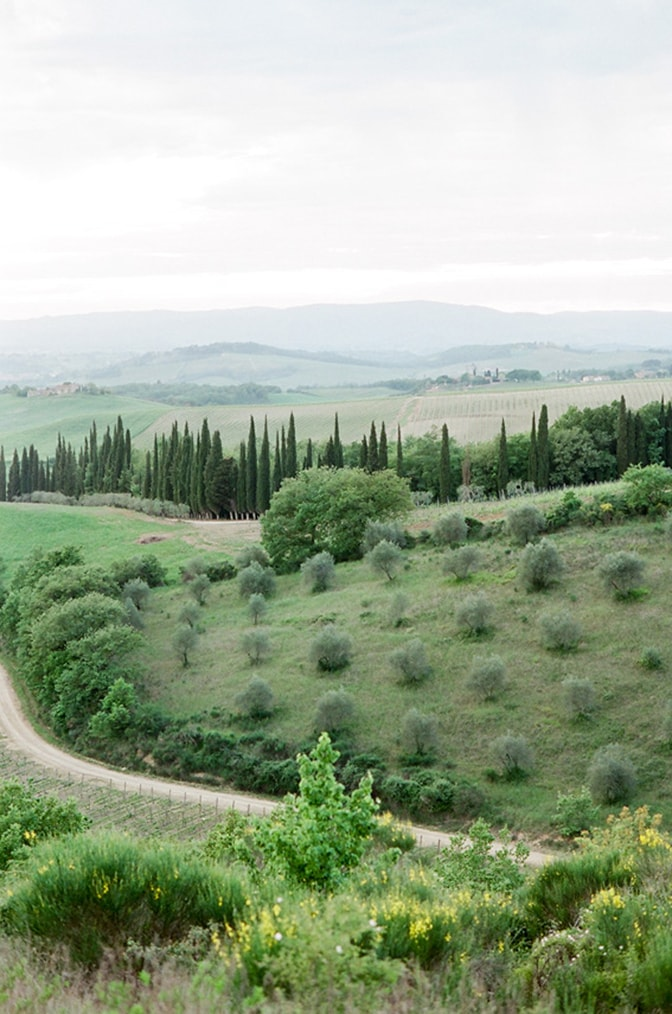 Cypresses aligned in Tuscany, Italy