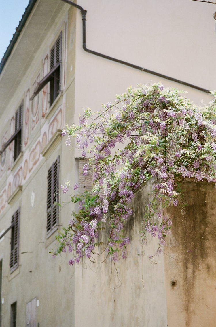 A LUXURY DESTINATION WEDDING PHOTOGRAPHER'S TOUR GUIDE TO FLORENCE depicting wisteria on a yellow-colored building