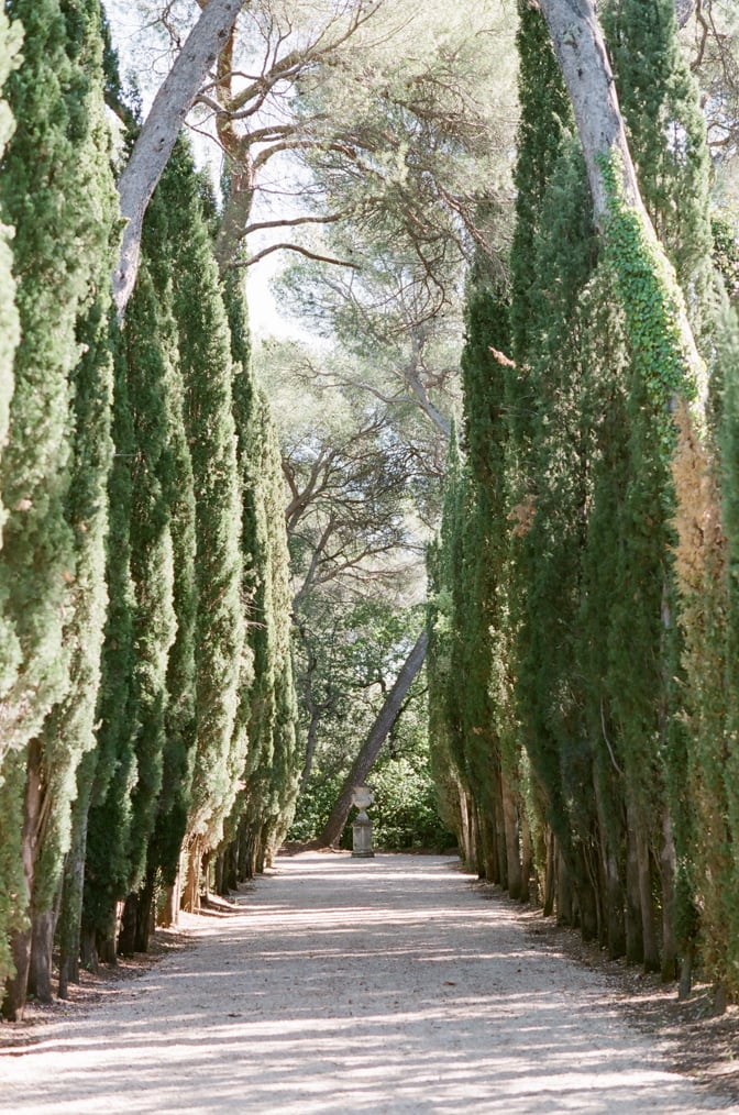Cypress alley way in the gardens of Chateau Martinay in Provence