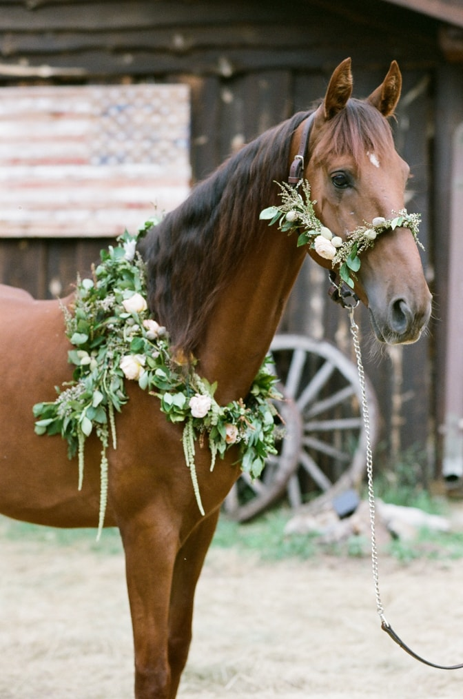 Horse adorned with flower wreath in Colorado