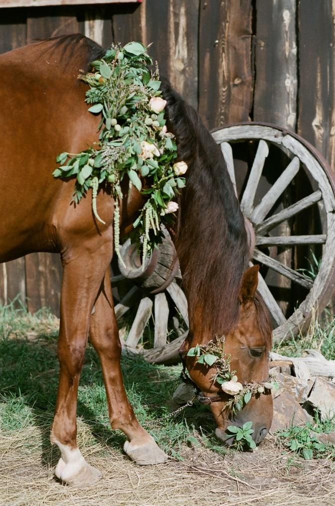 Horse adorned with flower wreath eating grass in Colorado