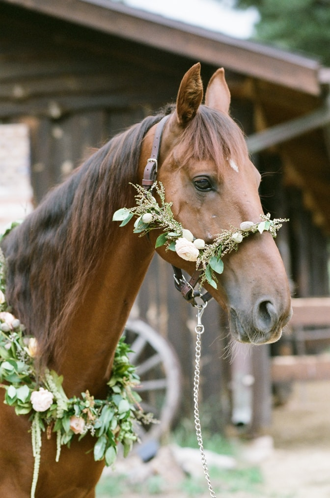 Closeup of brown horse adorned with flower wreath around neck in Colorado