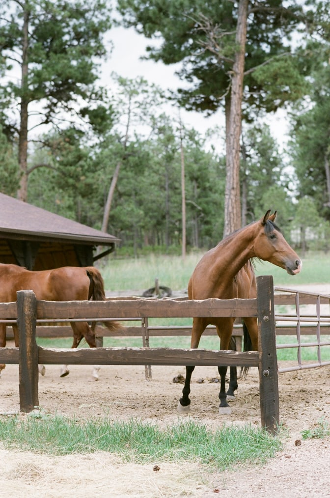 Brown horses on a private horse ranch in Colorado Springs