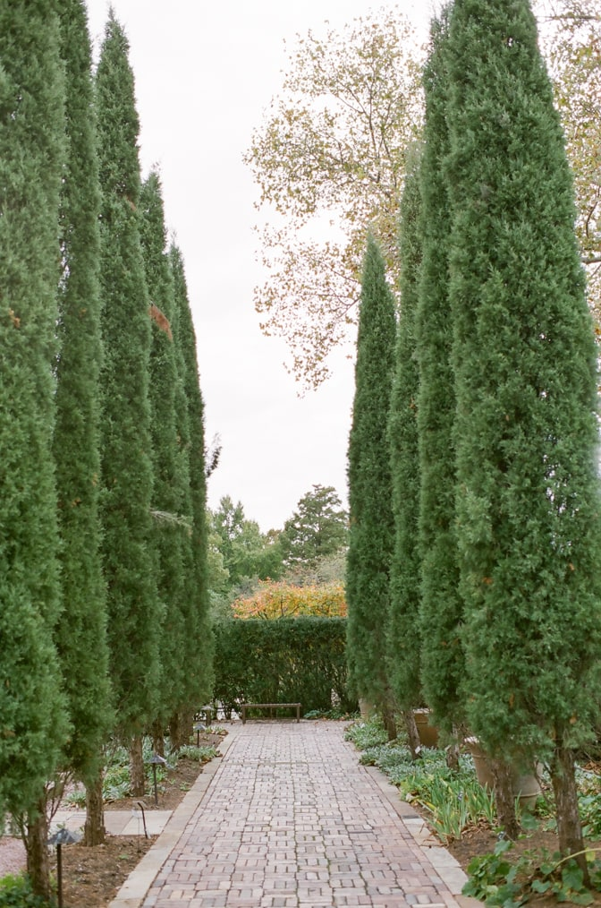 Cypresses aligned at Ottoman Garden in St Louis