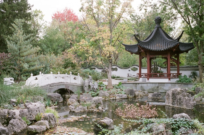 Fall foliage of the Chinese garden in St Louis