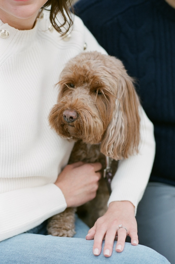 Closeup of dog during Chicago engagement session